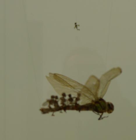 Swarm - Tessa Farmer