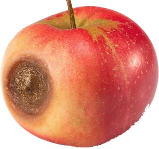 blemished apple