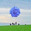 people sky grass rose
